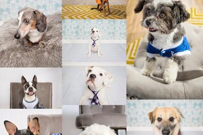Kansas City Pet Photography