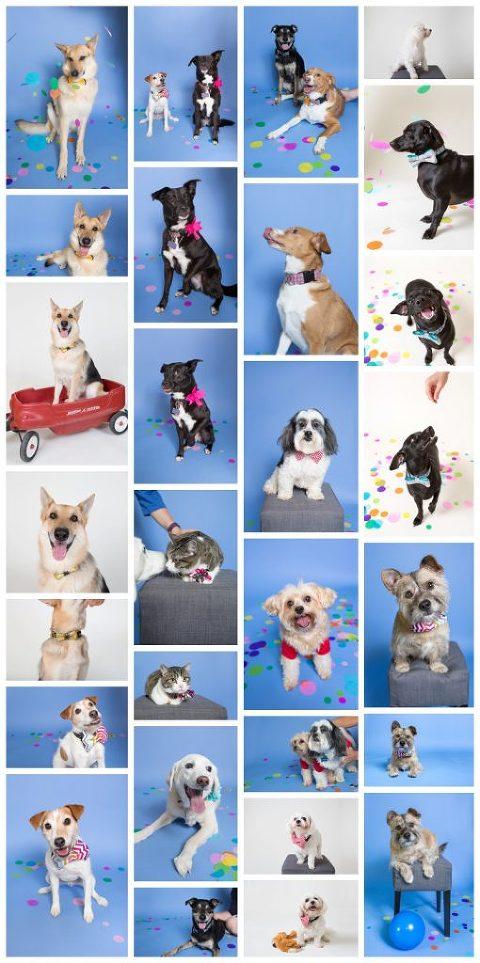 Dog & Cat Days of Summer 2016 samples
