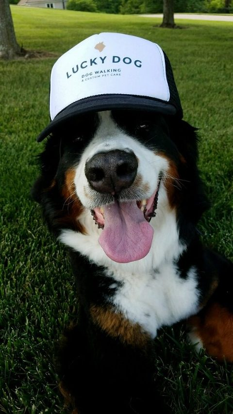 Lucky Dog-1
