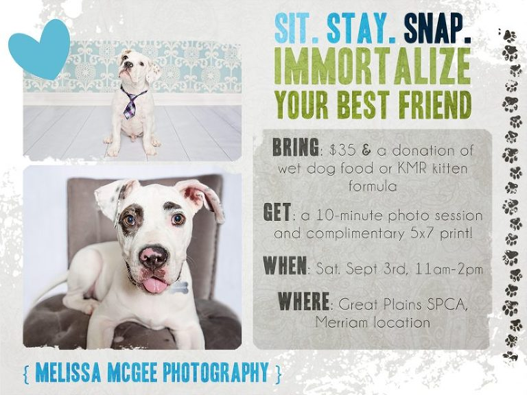 Click here to book your Dog and Cat Days of Summer session!