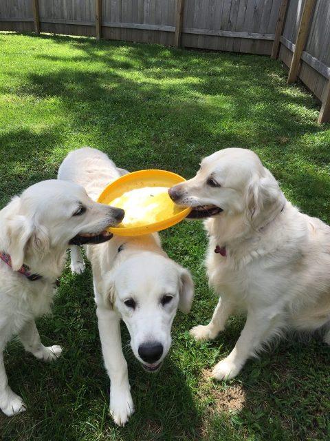 Lucky Dog-3