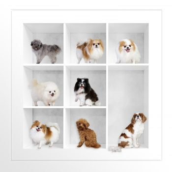 Pet-Photography-Kansas-City-dogs-composite